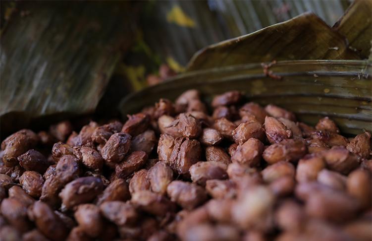 バナナの葉で発酵させているカカオ豆